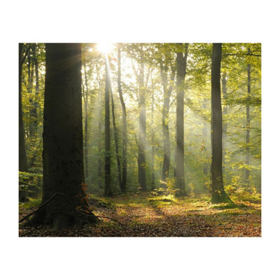 Brewster Wall Tranquil Forest Mural Wall Decal