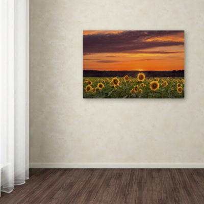 Trademark Fine Art Michael Blanchette PhotographySunflower Sunset Giclee Canvas Art