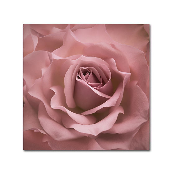 Trademark Fine Art Cora Niele Misty Rose Pink Rose Giclee Canvas Art