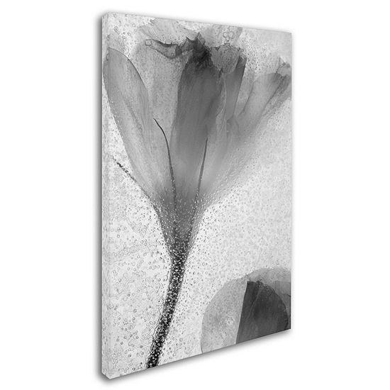 Trademark Fine Art Moises Levy Flowers on Ice-13 Giclee Canvas Art