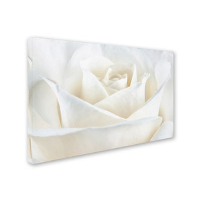 Trademark Fine Art Cora Niele Pure White Rose Giclee Canvas Art