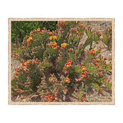 Prickly Pear Cactus Framed Canvas Art