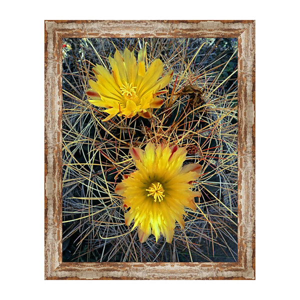 Fishhook Barrel Cactus Framed Canvas Art