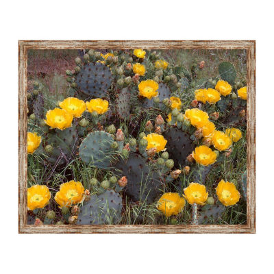 Engelmanns Prickly Pear Framed Canvas Art