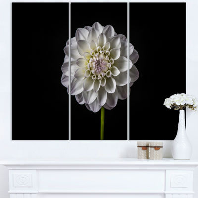 Designart Isolated Dahlia Flower In Black Floral Art Triptych Canvas Print