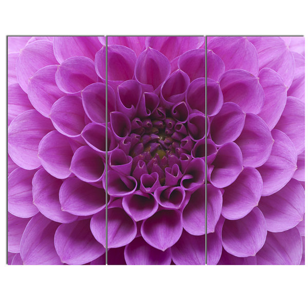 Designart Large Light Purple Flower And Petals Floral Canvas Art Print - 3 Panels