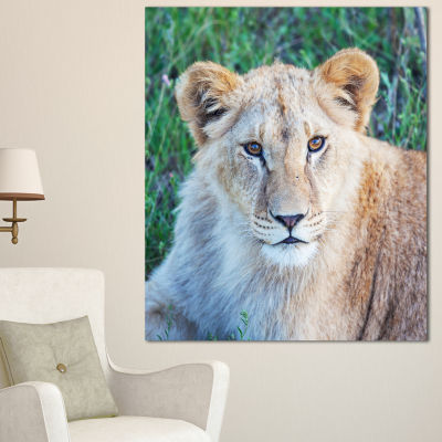 Designart Large Lion Relaxing In Forest African Wall Art Print - 3 Panels