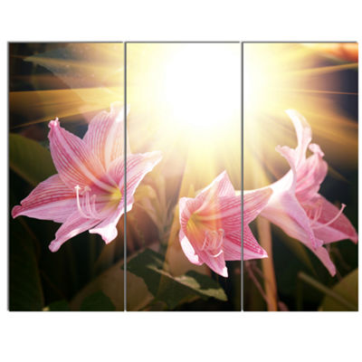 Designart Large Pink Flowers With Sunlight Large Flower Canvas Art Print - 3 Panels