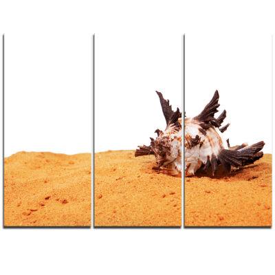 Designart Large Sea Shells On Sand Seascape Triptych Canvas Art Print