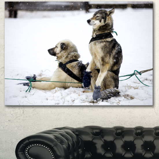 Designart Large Sled Dogs Relaxing Oversized Animal Wall Art