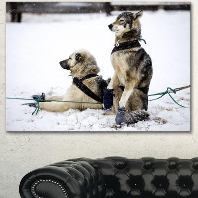 Designart Large Sled Dogs Relaxing Oversized Animal Wall Art - 3 Panels