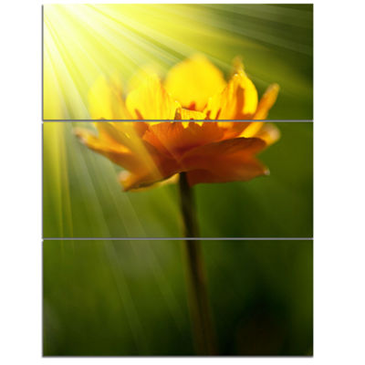 Designart Large Yellow Flower In Spotlight Large Flower Canvas Art Print - 3 Panels
