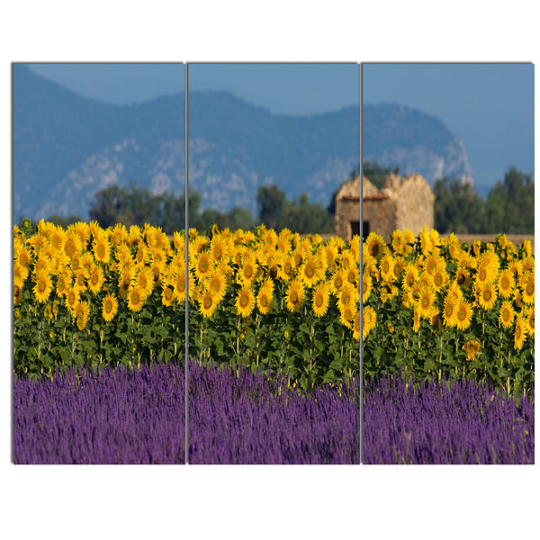 Designart Lavender And Sunflower In Provence Floral Canvas Art Print - 3 Panels