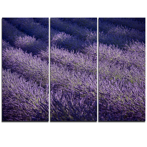 Designart Lavender Field And Ray Of Light Oversized Landscape Wall Art Print