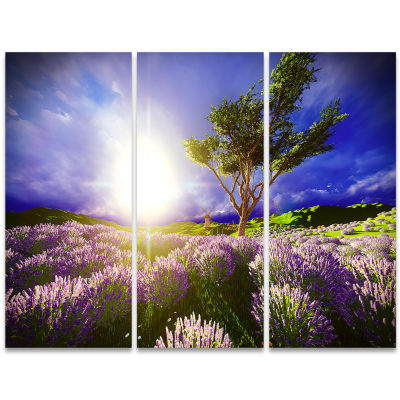 Designart Lavender Field Under Blue Sky Modern Landscape Wall Art Triptych Canvas