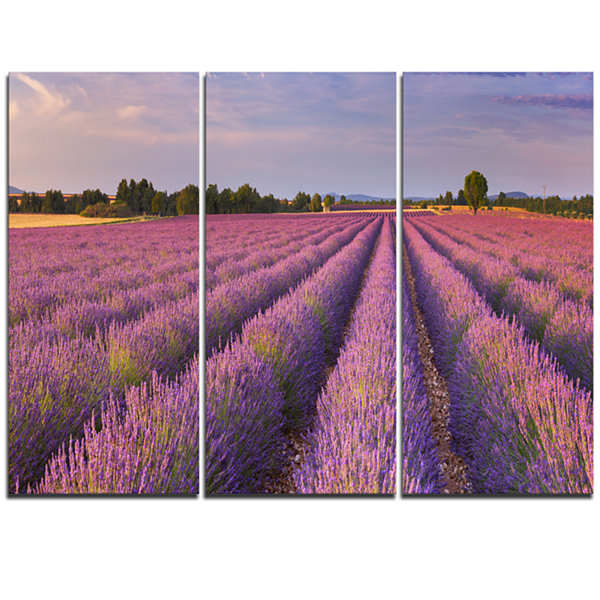 Designart Lavender Flower Rows In France LandscapeTriptych Canvas Art Print