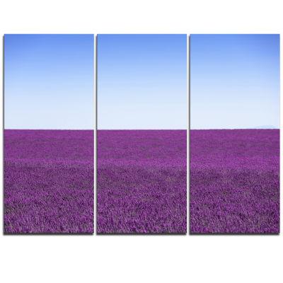 Designart Lavender Flowers With Blue Horizon Oversized Landscape Wall Art Print