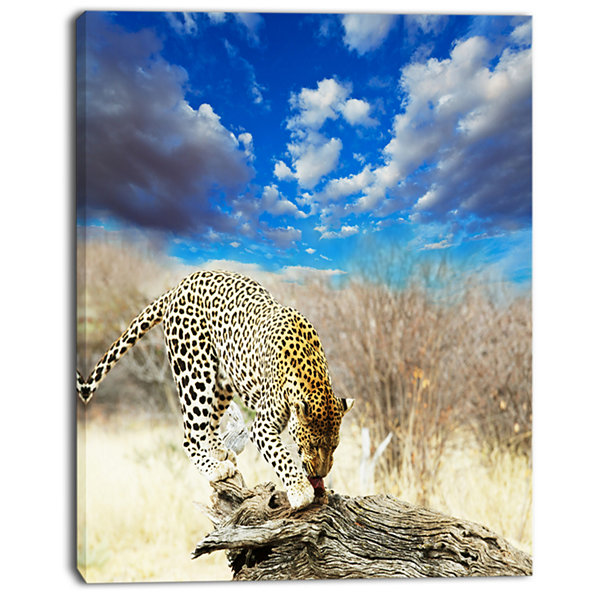 Designart Leopard Feeding On Tree Trunk Extra Large African Canvas Art Print