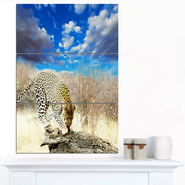 Designart Leopard Feeding On Tree Trunk Extra Large African Canvas Art Print - 3 Panels