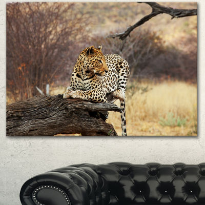 Designart Leopard Sitting On Tree Trunk Extra Large African Canvas Art Print