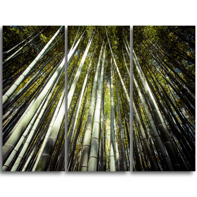 Designart Long Bamboos In Bamboo Forest Forest Triptych Canvas Wall Art Print