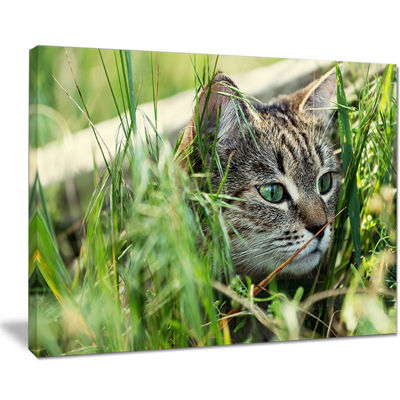 Designart Lovely Kitten In Grass Animal Art Painting