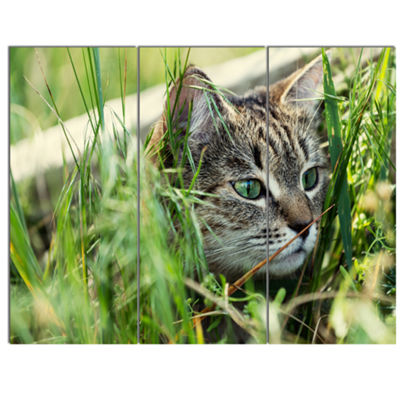 Designart Lovely Kitten In Grass Animal Art Painting - 3 Panels