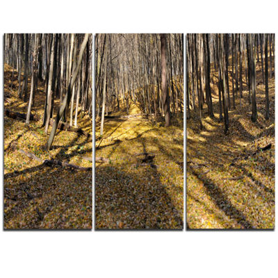 Designart Majestic Autumn Forest Panorama Landscape Artwork Triptych Canvas