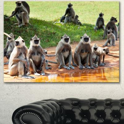 Designart Monkeys In Sri Lanka African Canvas ArtPrint