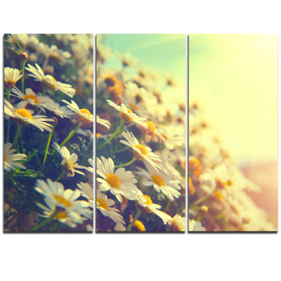Designart Nature With Blooming Chamomiles Large Floral Wall Art Triptych Canvas