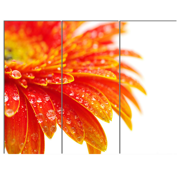 Design Art Orange Gerbera With Raindrops Floral Canvas Art Print - 3 Panels