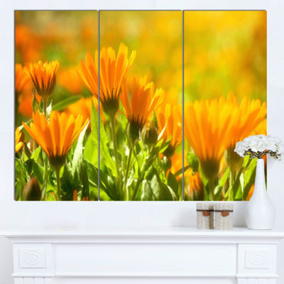 Designart Orange Marigold Flowers In Sunlight Floral Canvas Art Print - 3 Panels