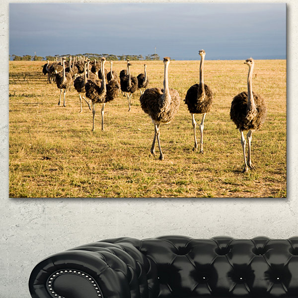 Designart Ostriches Walking In South Africa African Canvas Art Print