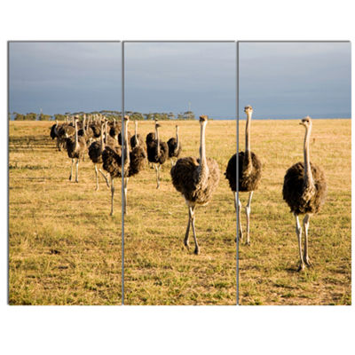 Designart Ostriches Walking In South Africa African Canvas Art Print - 3 Panels
