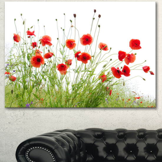 Designart Poppies On White Background Floral Canvas Art Print