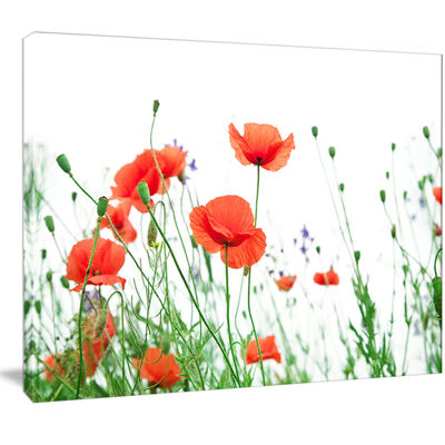 Designart Poppy Flowers On White Background FloralCanvas Art Print