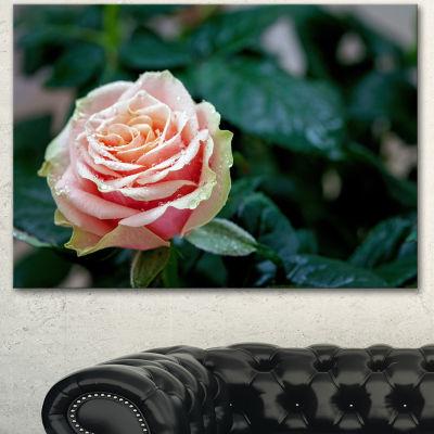 Designart Red And Orange Rose Flower Close Up Floral Canvas Art Print - 3 Panels