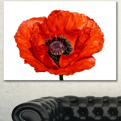 Designart Red Poppy Blossom Close Up Floral CanvasArt Print