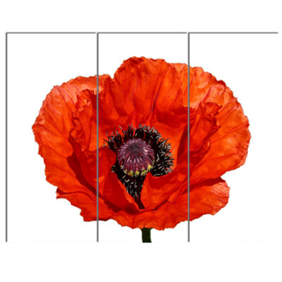 Designart Red Poppy Blossom Close Up Floral CanvasArt Print - 3 Panels