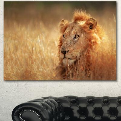 Designart Relaxing Lion In Grassland African Canvas Art Print - 3 Panels