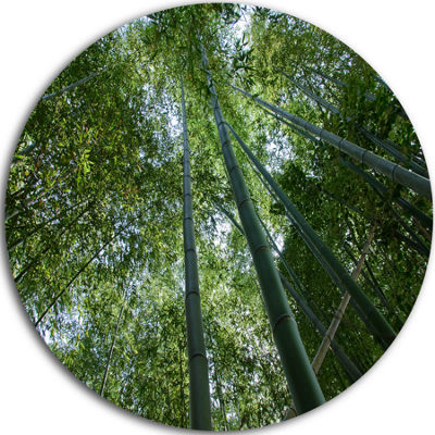 Design Art Bamboo Forest Seen from Ground Forest Metal Circle Wall Art Print
