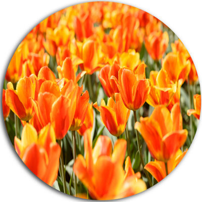 Design Art Fresh Tulip Flowers on Sunny Day UltraGlossy Floral Metal Circle Wall Art