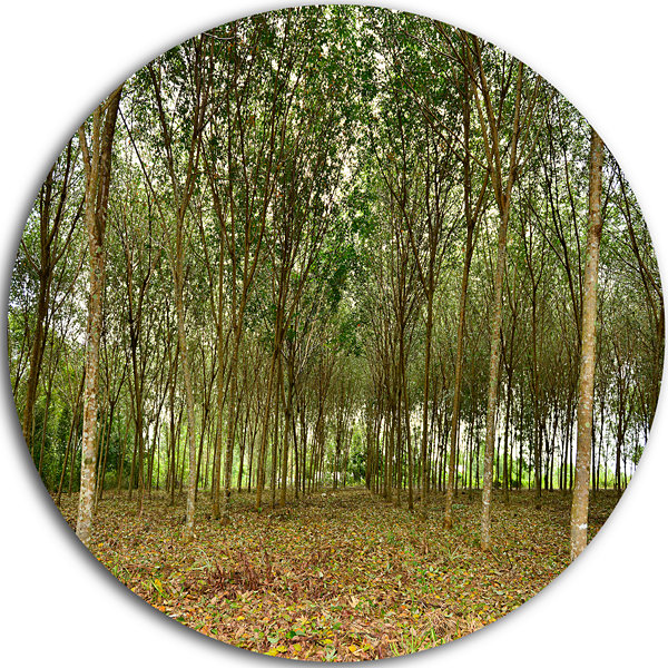 Design Art Rubber Tree Plantation during Midday Landscape Metal Circle Wall Art