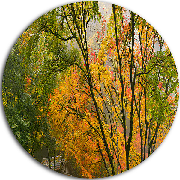 Design Art Canopy of Maple Trees in Fall Disc Floral Photo Circle Metal Wall Art