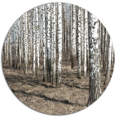 Designart Beautiful Dense Birch Forest View Disc Forest Large Metal Circle Wall Art