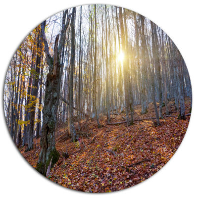 Designart Setting Sun in Dense Fall Forest Disc Forest Large Metal Circle Wall Art