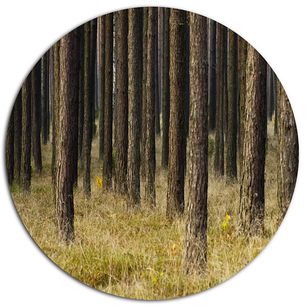 Designart Dark Fall Forest with Green Grass Disc Forest Metal Circle Wall Arts