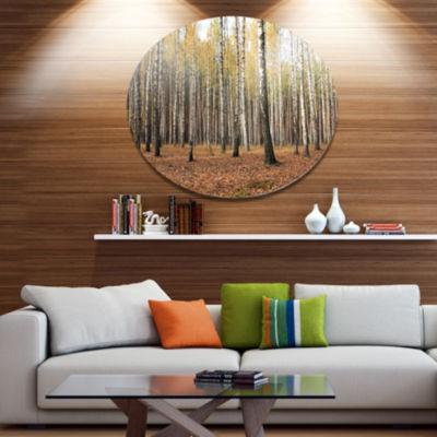 Designart Beautiful Birch Forest Photography DiscForest Metal Circle Wall Arts