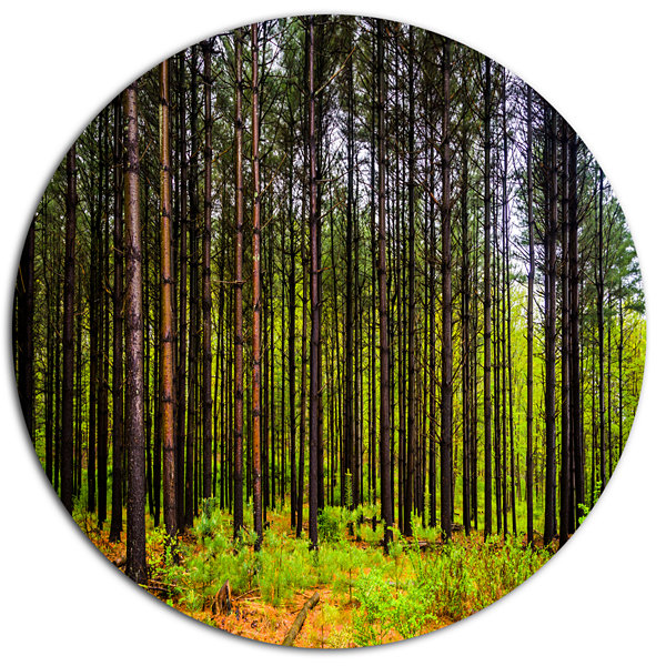 Designart Pine Trees in Michaux Forest Disc ForestMetal Circle Wall Arts