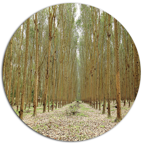 Designart Rubber Trees Row in Thailand Disc ForestMetal Circle Wall Arts